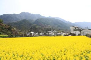 中国非物质文化遗产功勋艺术家 骊山 摄